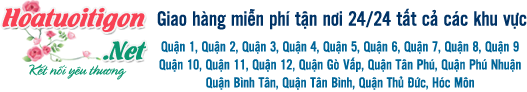 Banner hoatuoitigon.net